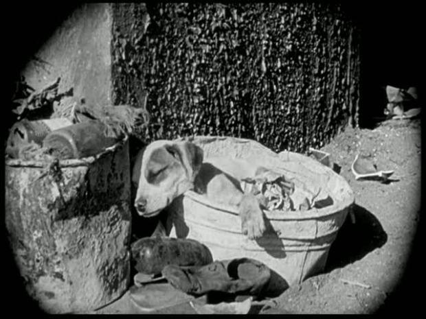 cão-vida-de-cachorro-1918