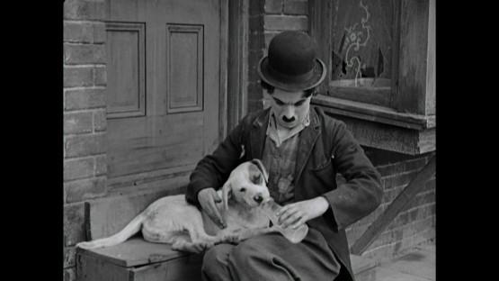 cena-a-dogs-life